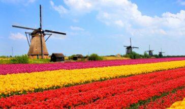Best universities in Netherlands